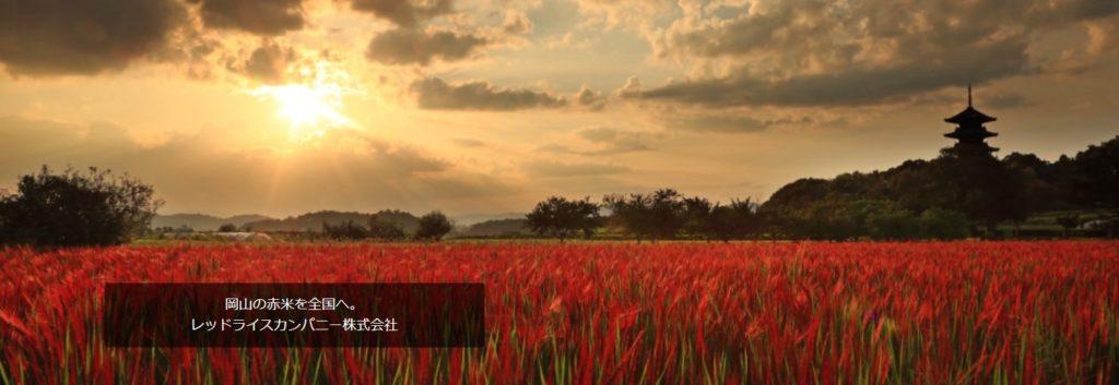 レッドライスカンパニー総社市の赤米田んぼ風景
